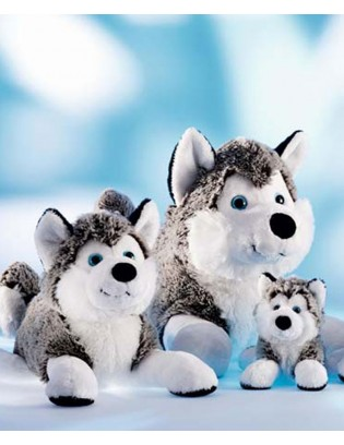 Schaffer Collection: Husky